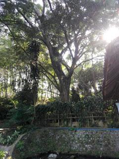Sumber Biru, Batarubuh, Botorubuh, Mbiru, Singosari, Malang, Sumber Nagan, Sumberawan