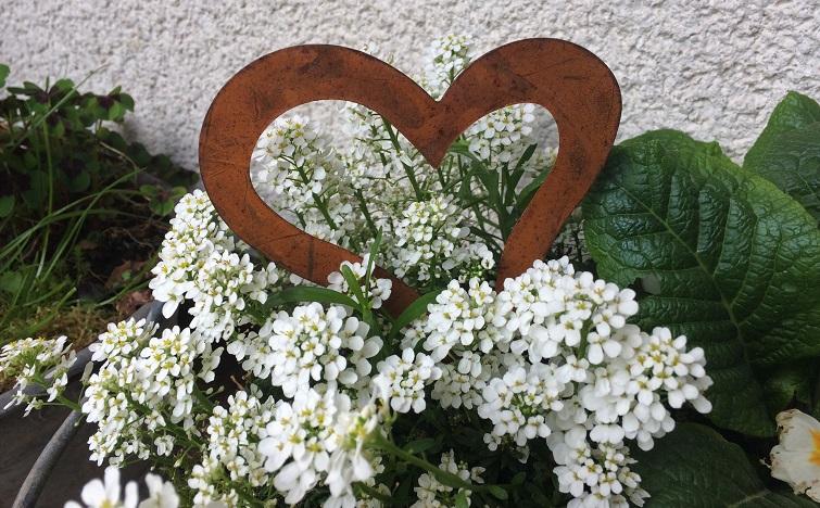 Schalen bepflanzen mit Frühjahrsblumen