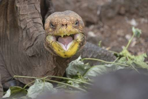 Impressive! Meet Diego the sex-crazed tortoise who saved his species 2