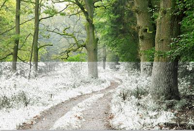Tutorial Cara Membuat Efek Infrared Menggunakan Photoshop Dengan Mudah