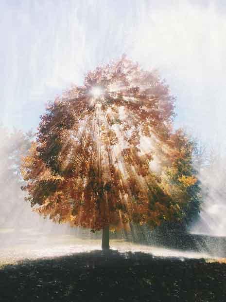 Pohon yang menyala