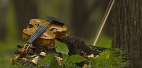 Muzsikál az erdő a Körösök völgyében - Programok Gyulán és környékén