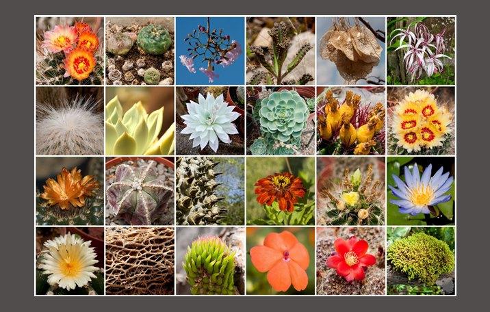 Kingdom Plantae (Tumbuhan) : Pengertian, Ciri, Klasifkasi