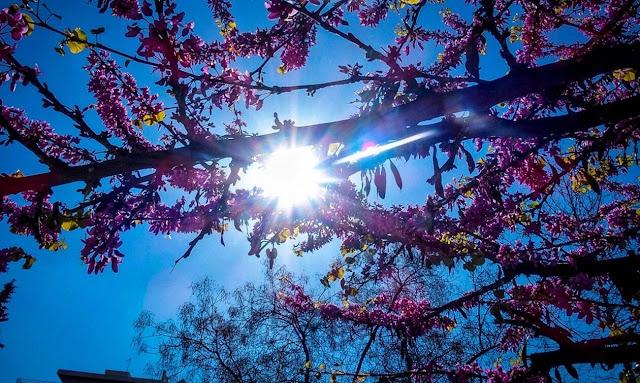 21-03-57-image-5cbbea3836f29