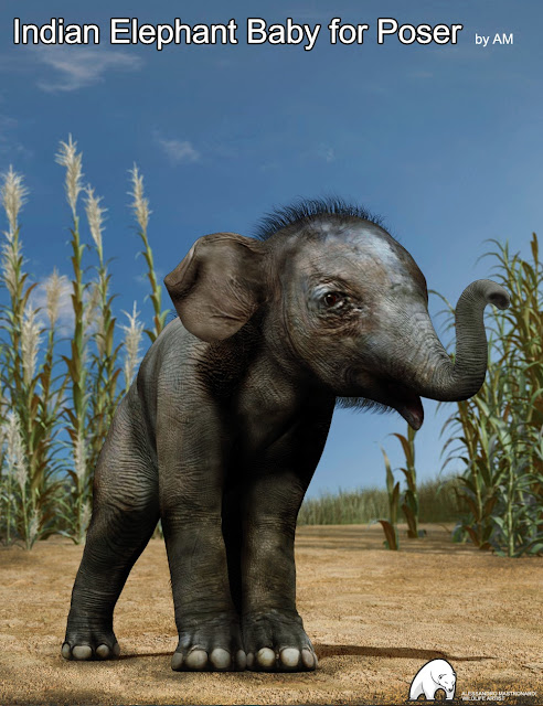 Indian Elephant Baby for Poser by AM
