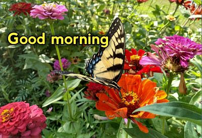 good morning flowers hd