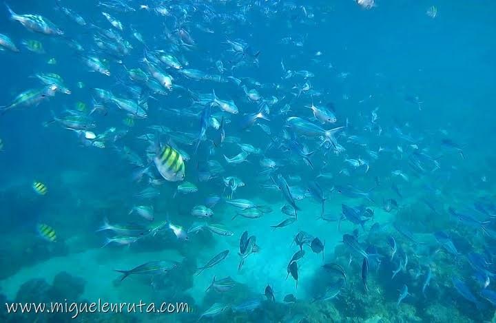 Peces en Shark Point, Phi Phi