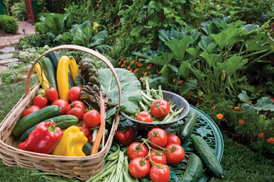 Greatest Tips for Organic Gardening by Embellishinghome