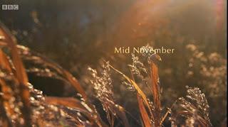 Mid November