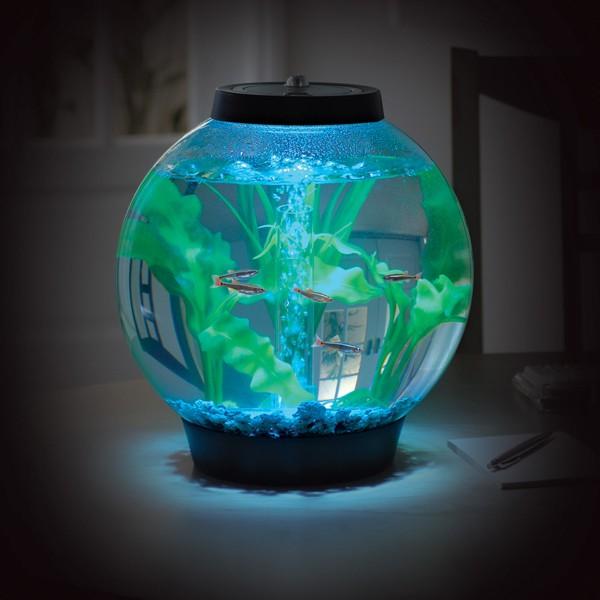 idée déco aquarium boule