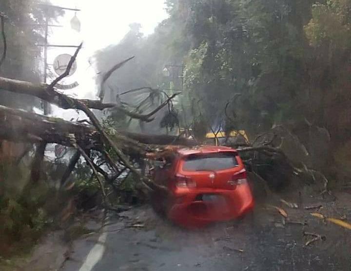 Angin Kencang Terjang Kawasan Puncak, Mobil Sedan Ringsek Tertimpa Pohon Tumbang