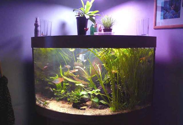 cara menguras aquarium