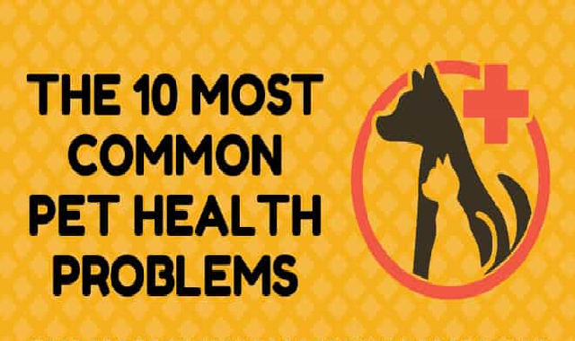10 Most Common Pet Health Problems #infographic