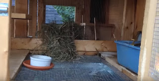 Kandang Buat Kelinci papan dan ram sederhana