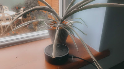 amazon echo dot on a window sill with a plant behind it