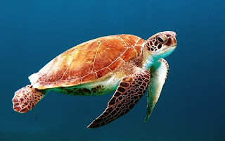 turtles have hard shell