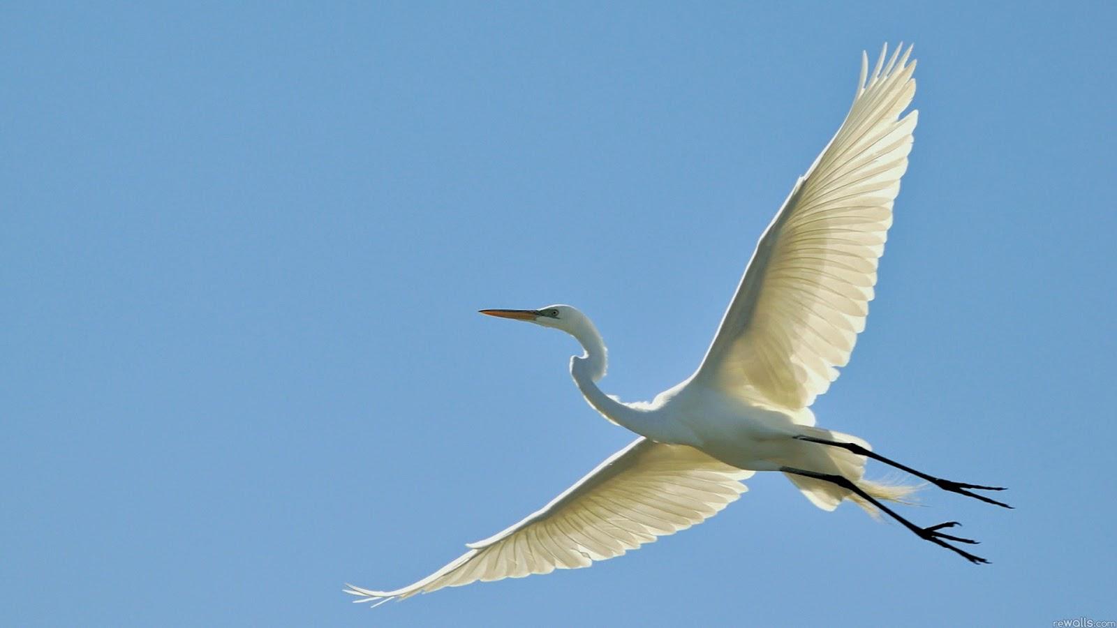 Beautiful And Dangerous Animals Birds Hd Wallpapers: 10 Most Beautiful Flying Birds New HD Wallpapers 2014