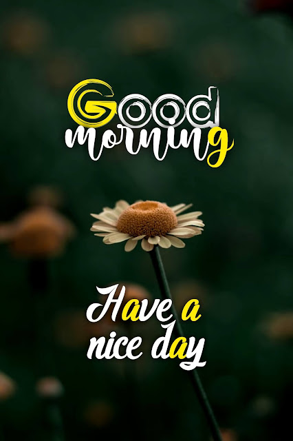 21+ amazing good morning images hd, gud mrng pics,wishes, greetings
