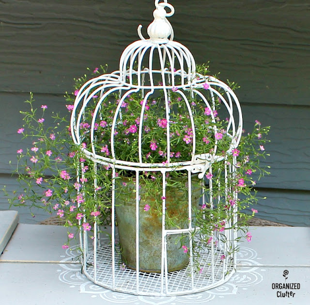 Upcycled Thrift Shop Bird Cage & Annual Baby's Breath