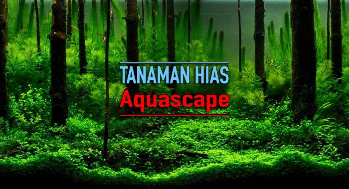Rekomendasi Tanaman Hias Aquascape Untuk Pemula