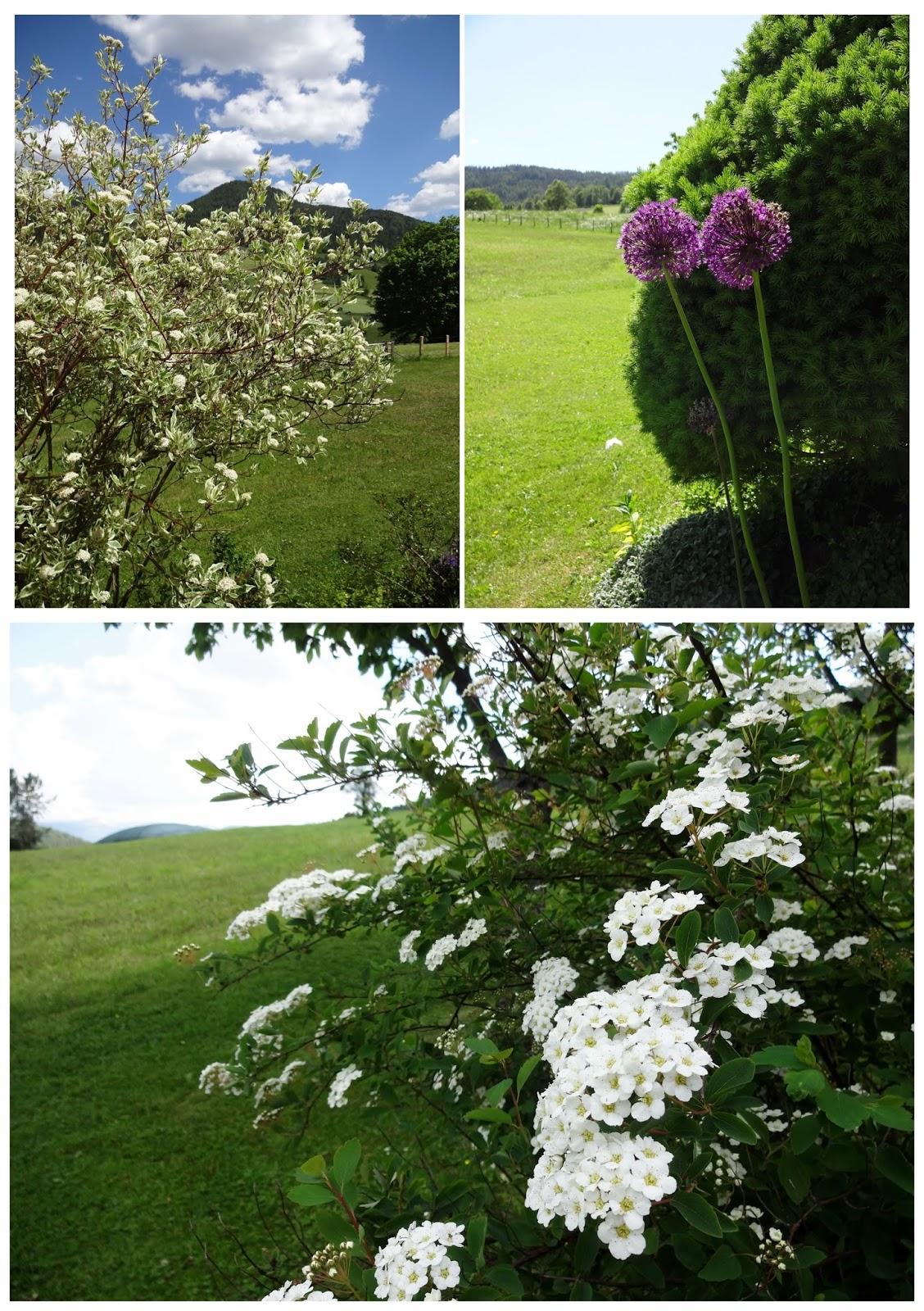 Blumen Sträucher