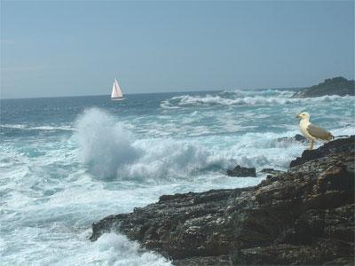 Resultado de imagen para OCEANOGRAFIA