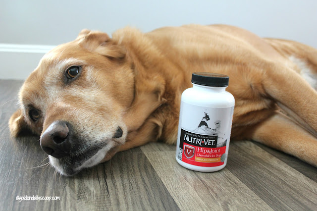 helping your dog with hip dysplasia and arthritis with Nutri-Vet supplement