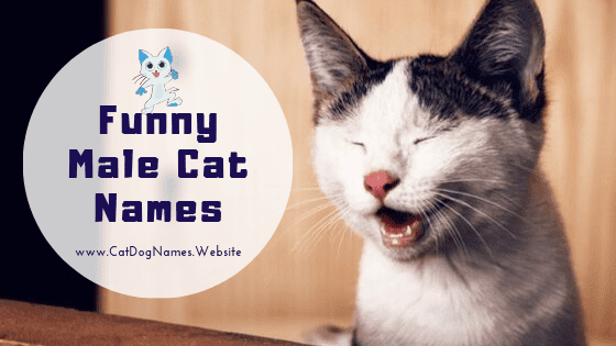 Funny Male Cat Names For Clever, Funniest, Cute And Best Names List