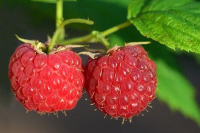 manfaat raspberry untuk Melawan radikal bebas