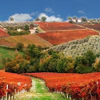 Montefalco vineyard
