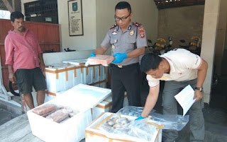 Smuggling of Frozen Meat into Bali was foiled