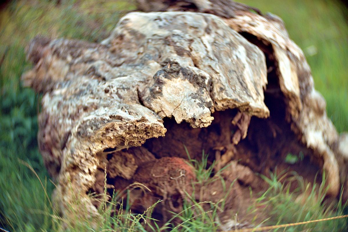 Hohler Baum aus 3 Blickwinkeln