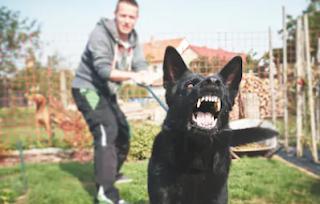 7 Ciri-ciri Anjing Rabies Setelah Menggigit Manusia