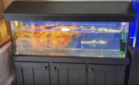 Restore aquarium cabinet & canopy