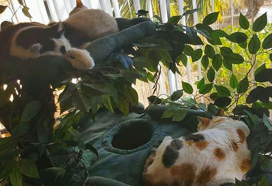 Large Cat Furniture for Multiple Cats