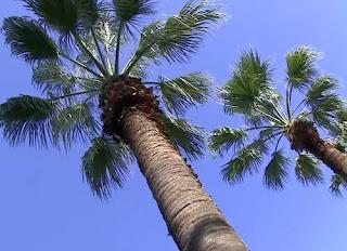 пальмовое масло запрещено