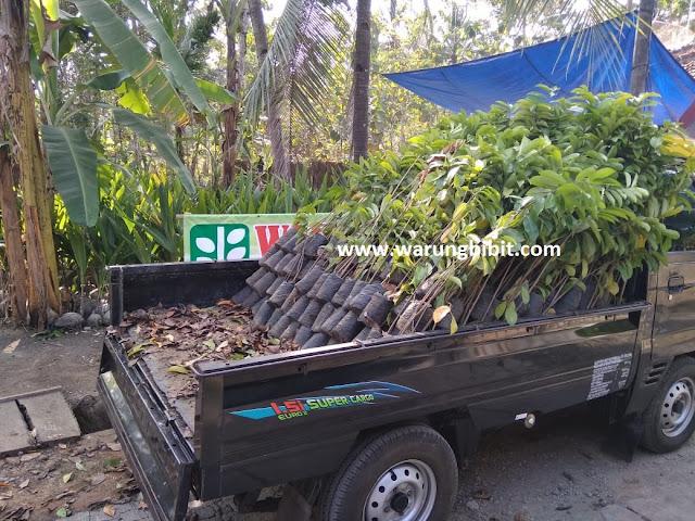 Pengiriman bibit, jual bibit unggul, paket bibit tanaman, pengiriman bibit dengan pick up