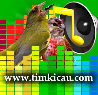 7 Audio Suara Burung Finch Untuk Masteran
