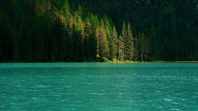 Paisagem Natural Floresta Lago Verde
