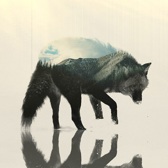 Wolf Double exposure Wallpaper Engine