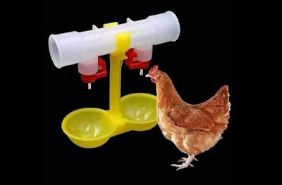 water for poultry