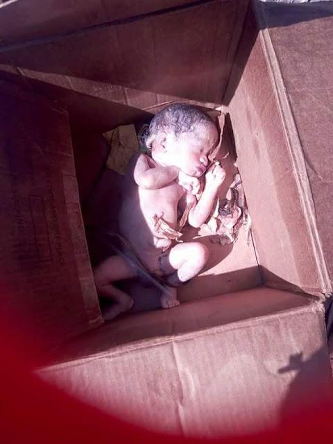 Graphic Photos: Newborn baby found dead inside carton
