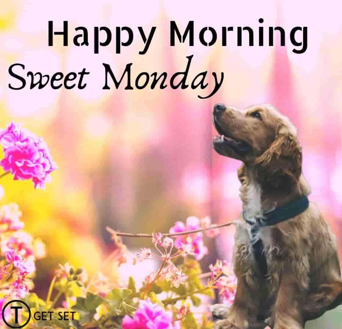 sweet-monday-and-happy-morning-dog-image