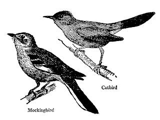 bird craft transfers digital collage sheet drawings free downloads