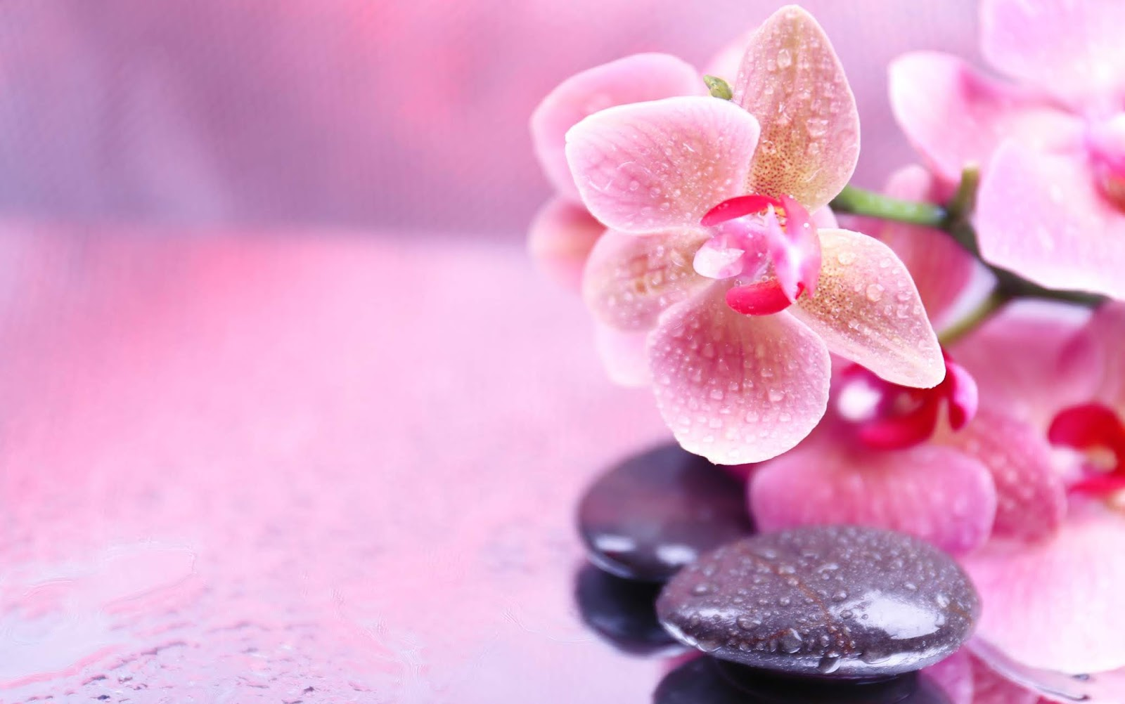 39+ Hình nền hoa phong lan đẹp Full HD cho desktop laptop