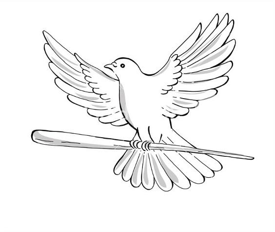 Gambar sketsa burung merpati