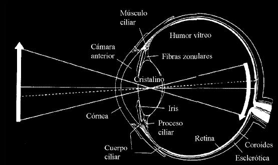 parábola,-circunferencia-y-similitud-al-ocular-de-un-ojo