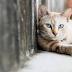 Θεσσαλονίκη: Έκλεβαν οδηγούς λέγοντας ότι… θα πατούσαν γατάκι