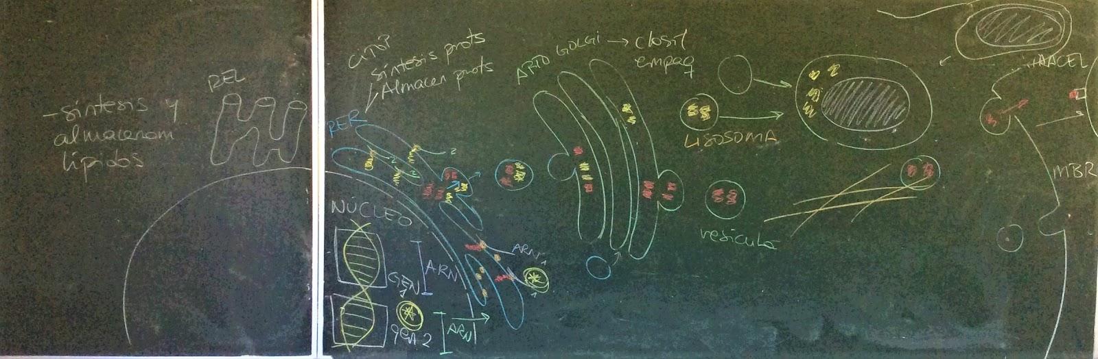 Biología Orvalle: 4º ESO