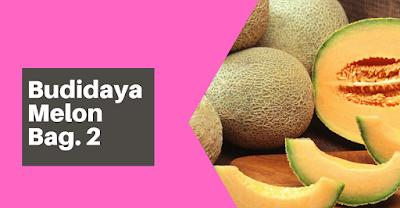 Taksonomi, Botani, Syarat Tumbuh melon